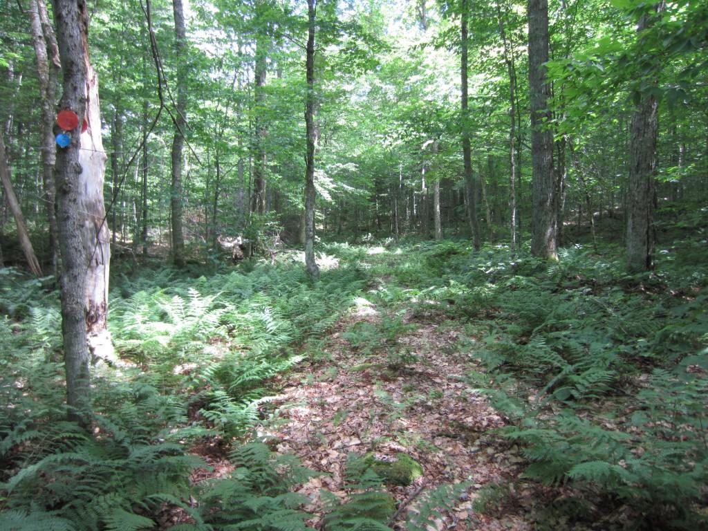 Trail?