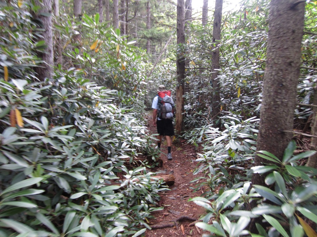Hiking through Mountain Laurel