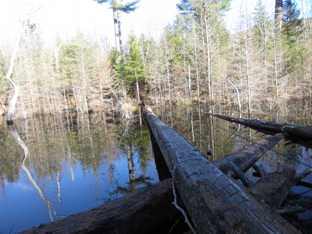 Log bridge over beaver pond